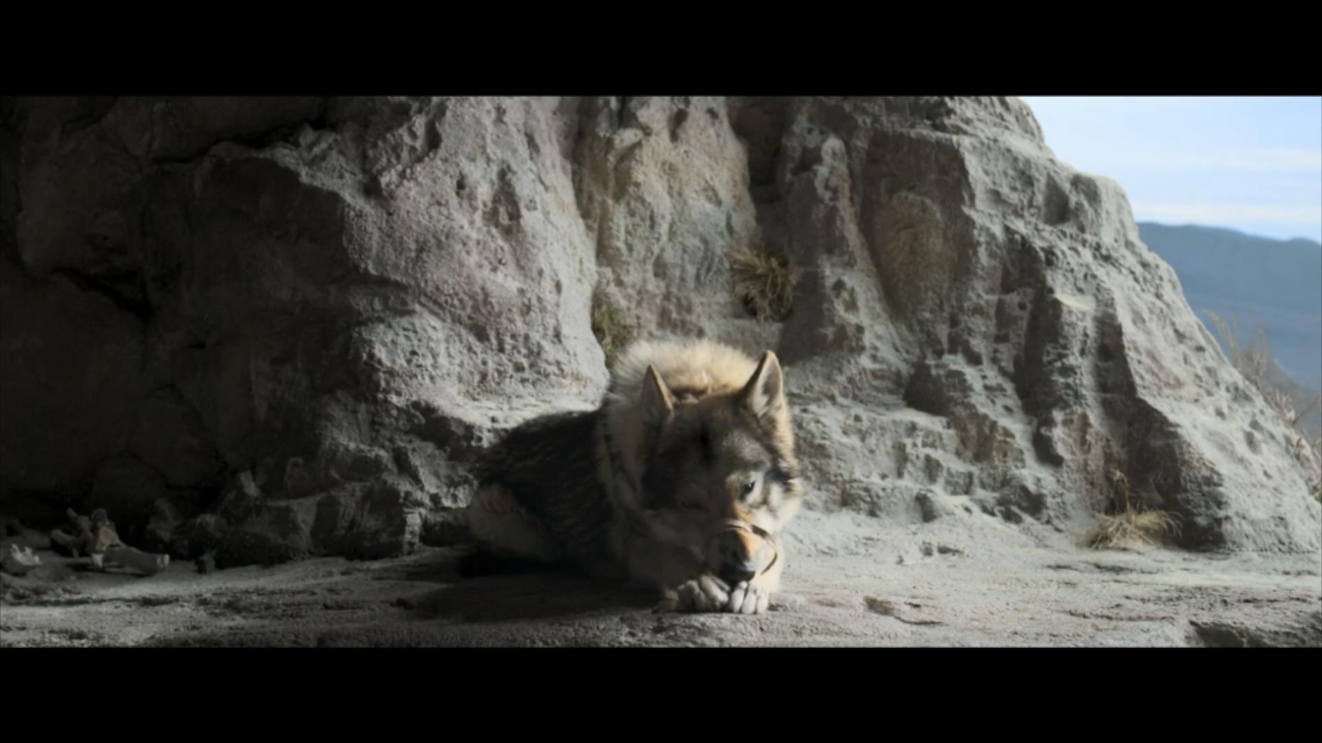 2018《阿尔法:狼伴归途》2700字,7分钟剧情解说稿-第6张图片